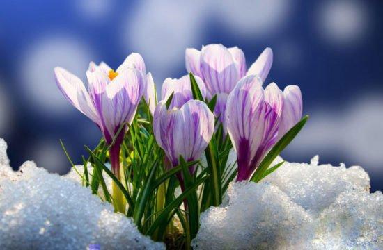 Ontwaken tijdens de lente: 7 dagen voor de prijs van 6 dagen