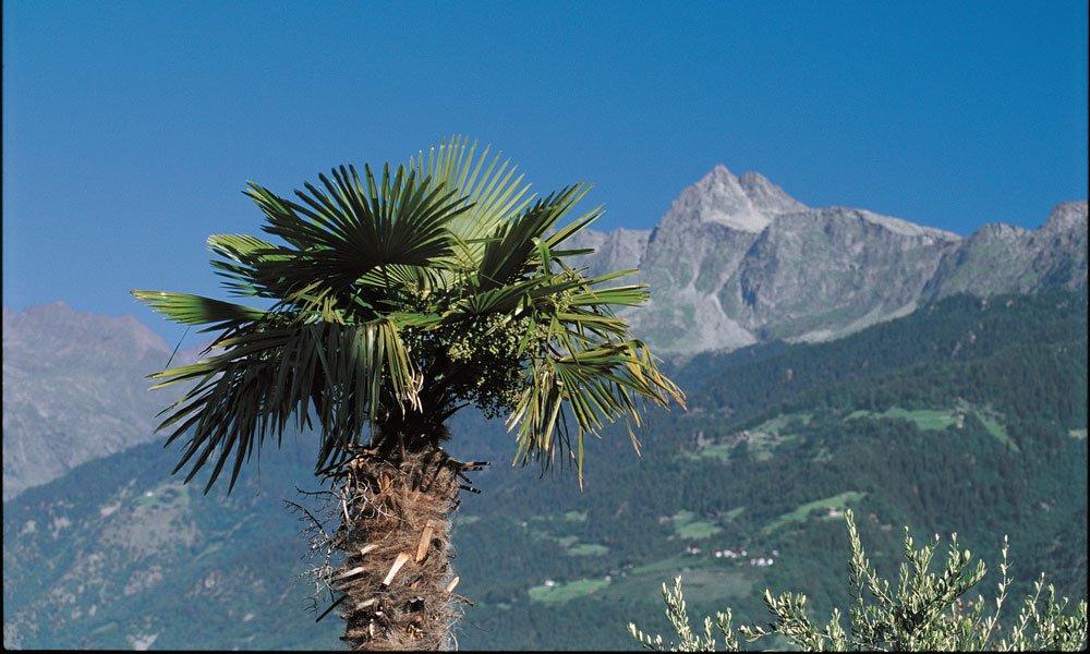 Tussen almen en palmen