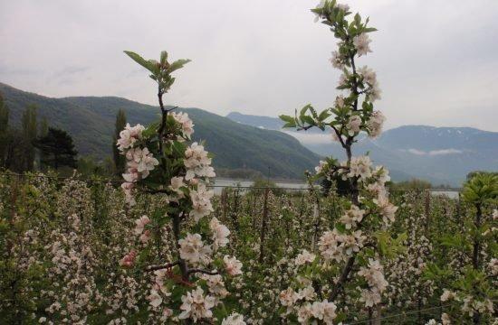 Wanderung Frühlingstal in Kaltern April 2019
